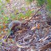 Mongoose Monitoring Update