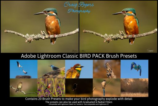 Lightroom Classic Brush Presets
